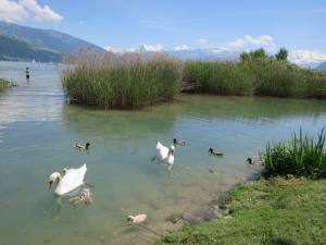 am